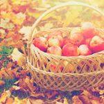Change of Season Natural Health Insurance